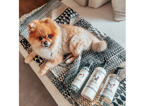 Gifts for Dog